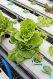 Organicznie hydroponic jarzynowego ogródu Tajlandia merket Obrazy Royalty Free