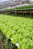 Organicznie hydroponic jarzynowy kultywaci gospodarstwo rolne Zdjęcia Stock