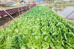 Organicznie hydroponic jarzynowy ogród fotografia stock