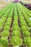 Organicznie hydroponic jarzynowy ogród obraz stock