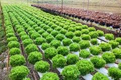Organicznie hydroponic jarzynowy ogród zdjęcia stock