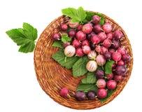 Organicznie i zdrowi kolorowi agresty z świeżymi liśćmi w jaskrawej brown skrzynce, odizolowywającej na białym tle Zdjęcia Stock