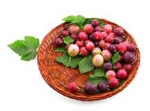 Organicznie i zdrowi kolorowi agresty z świeżymi liśćmi w jaskrawej brown skrzynce, odizolowywającej na białym tle Obraz Royalty Free