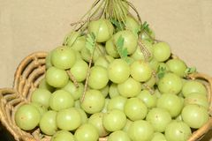 Organicznie Indiański agrest lub Amla Obrazy Stock