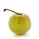 Organicznie Indiański agrest (Phyllanthus emblica) Obrazy Royalty Free