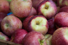 Organicznie jabłka Fotografia Stock