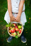 organicznie jabłko kosz Fotografia Stock