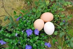 Organicznie jajka w ogródzie Zdjęcia Royalty Free
