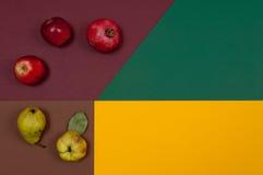 Organicznie jesieni dokrętek i owoc ustawiać odizolowywam na rozszczepionym backgro Zdjęcia Royalty Free