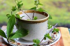 Organicznie kawa Obraz Royalty Free
