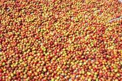 Organicznie kawowe fasole suszy w słońcu zdjęcia royalty free