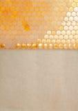 Organicznie kolor żółty, złocista honeycomb tekstura z świeżym Obrazy Royalty Free