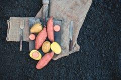 Organicznie korzeniowi warzywa i prosty batata lying on the beach na prostackim płótnie i rydlu słuzyć wioskę Jesieni żniwa kopia zdjęcie stock