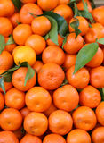 Organicznie mandarynki i pomarańczowi clementines z łupa bez leczenia dowcipem Zdjęcia Royalty Free