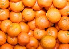 Organicznie mandarynki i pomarańczowi clementines z łupa bez leczenia dowcipem Fotografia Stock