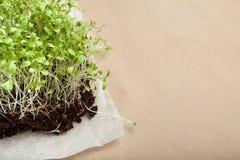 Organicznie mikro zielenie rosnąć w domu Opróżnia przestrzeń dla teksta zdjęcie royalty free