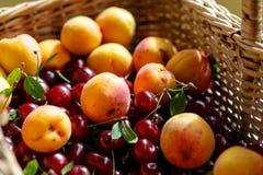 Organicznie morele i kwaśni cheriies w łozinowym koszu, słoneczny dzień z bliska zdjęcia stock