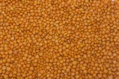 Organicznie naturalne pomarańczowe czerwone soczewicy w górę jedzenia obraz stock