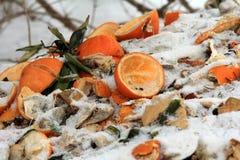 organicznie odpady Fotografia Royalty Free