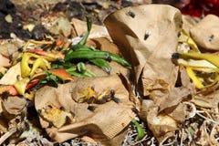 Organicznie odpady Zdjęcie Stock