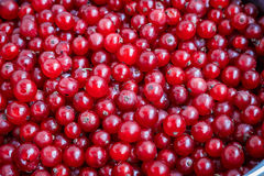 Organicznie ogrodowe jagody od above obecna czerwony Obraz Royalty Free