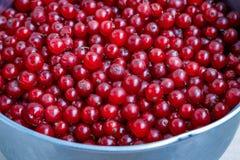 Organicznie ogrodowe jagody od above obecna czerwony Zdjęcia Royalty Free