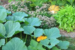 Organicznie permaculture ogród Zdjęcie Royalty Free