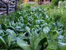 organicznie plantacja Fotografia Stock