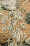 organicznie pojęcie: roślina & x28; mały tree& x29; Zdjęcie Royalty Free