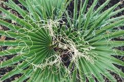 organicznie pojęcie: roślina & x28; palmowy tree& x29; Obrazy Stock