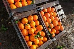 Organicznie pomarańcze dla sprzedaży w drewnianych pudełkach Fotografia Royalty Free