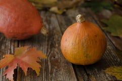 Organicznie pomarańczowa hokkaido bania na nieociosanych deskach, jesieni decorat Fotografia Royalty Free