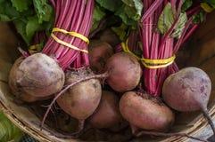 Organicznie purpura rytmy Zdjęcia Royalty Free