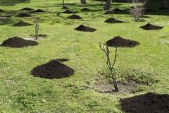 Organicznie roślina użyźniacz dla plantaci w gazonie Wiosna Obraz Stock