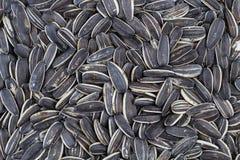 Organicznie słonecznikowy ziarno, organicznie słonecznikowy ziarno dla tło uses Obraz Stock