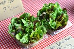 Organicznie sałat mieszanki wystawiać przy rolnika rynkiem Zdjęcie Stock