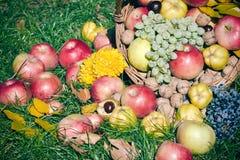 Organicznie, sezonowy, jesieni owoc w łozinowym koszu na trawie Fotografia Stock