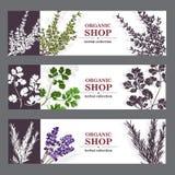 Organicznie Sklepowi sztandary Z ziele royalty ilustracja