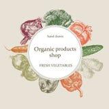 Organicznie sklepowy logo ręka patroszony wektor świezi ustaleni warzywa Zdjęcie Stock