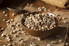Organicznie Suchy Black Eyed Peas Zdjęcia Stock