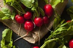 Organicznie Surowe Czerwone rzodkwie Obraz Royalty Free