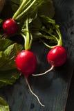 Organicznie Surowe Czerwone rzodkwie Obraz Stock