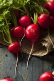 Organicznie Surowe Czerwone rzodkwie Fotografia Royalty Free