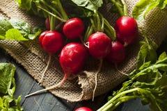 Organicznie Surowe Czerwone rzodkwie Zdjęcia Stock