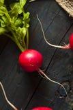 Organicznie Surowe Czerwone rzodkwie Zdjęcie Royalty Free