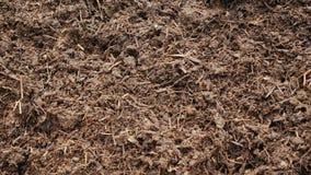 Organicznie użyźniacz - kompost lub czarnoziem Ecologically czysty użyźniacz zbiory