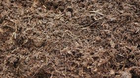 Organicznie użyźniacz - kompost lub czarnoziem Ecologically czysty użyźniacz zbiory wideo