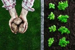 Organicznie uprawiać ogródek i uprawiać ziemię obraz royalty free