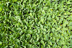 Organicznie uprawiać ziemię, sadzonkowy dorośnięcie w szklarni Fotografia Stock