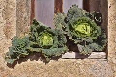 Organicznie uprawia ziemię warzywa Zdjęcia Royalty Free